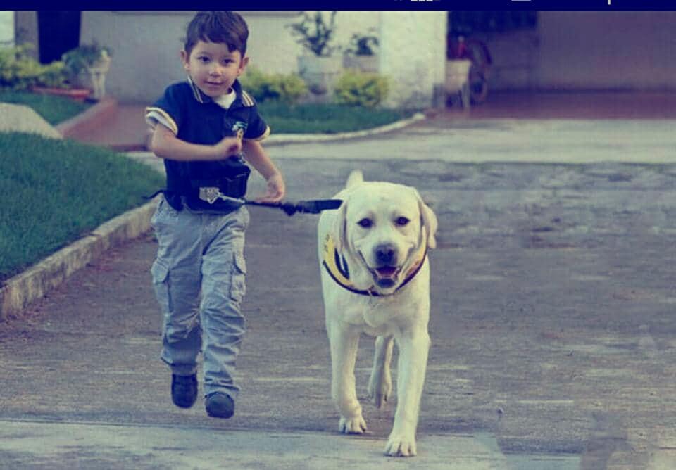 perros de asistencia Colombia